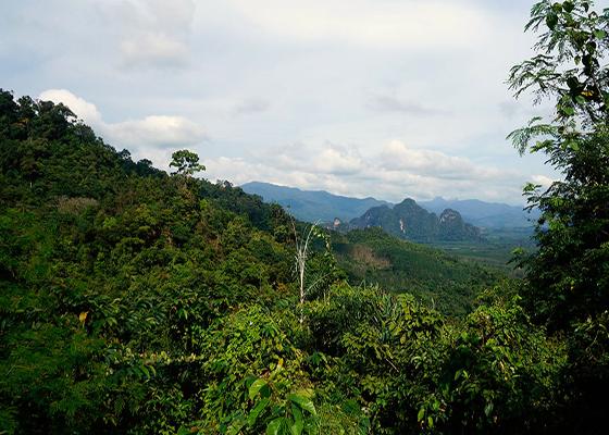 Private Khao Sok Safari Tour