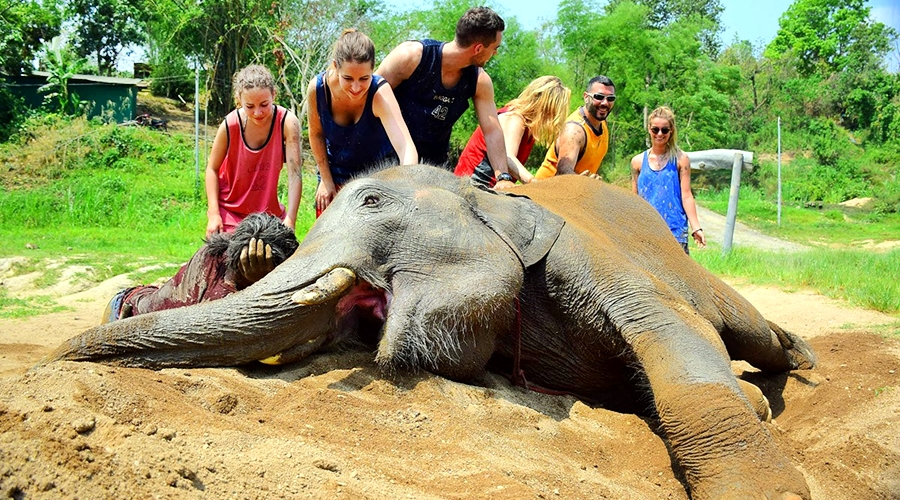Whitewater Rafting Elephant Care